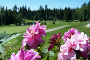 northlands_golf_20